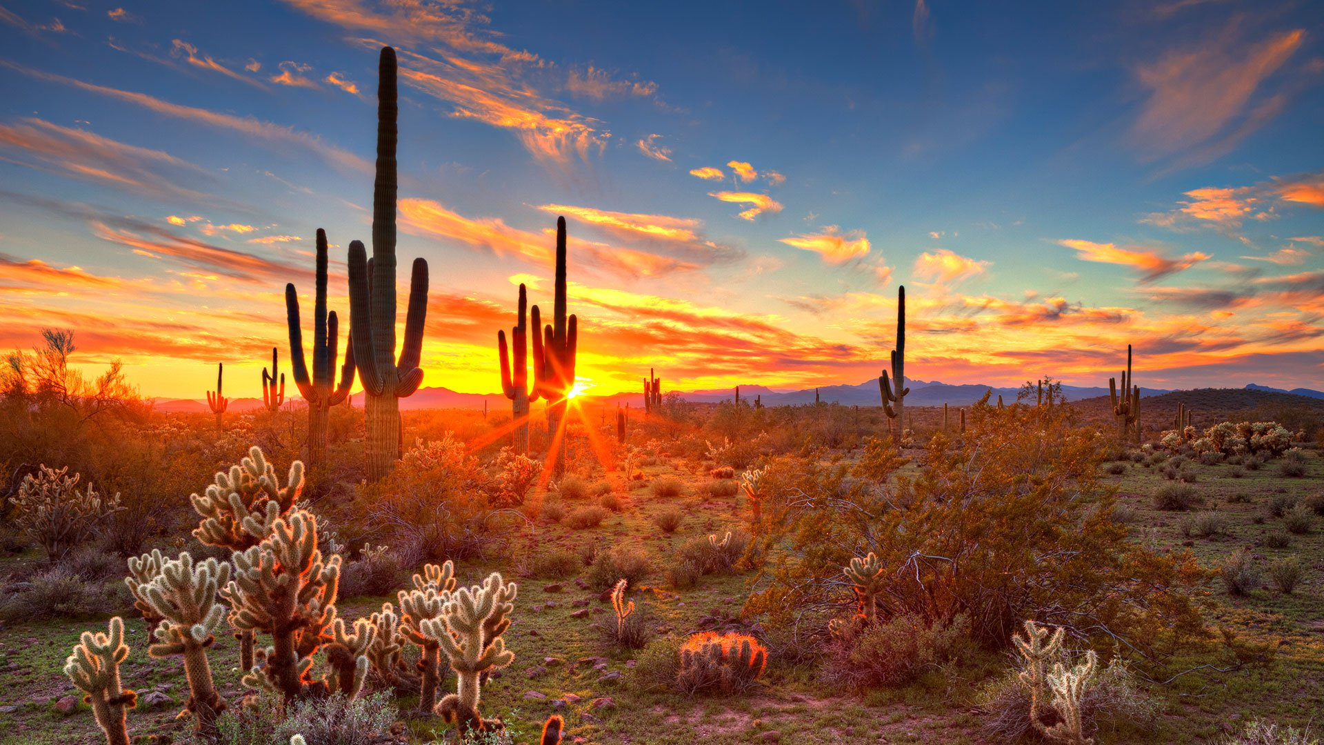 Phoenix Packages  JetBlue Vacations